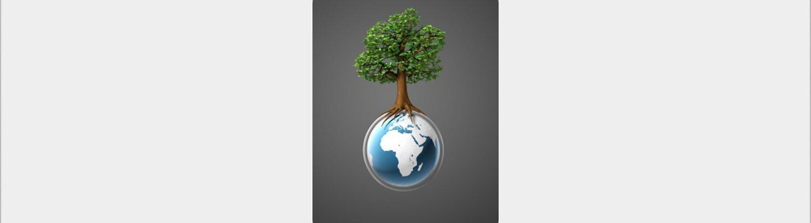Política Zero y Política Ambiental