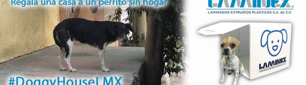 PuppyHouseLMX Regala una Casita a Perritos de la Calle de material 100% reciclable